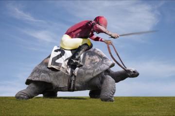 Jokey over a turtle